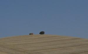 Rolling hills, Wheat Fields, Cadiz Province