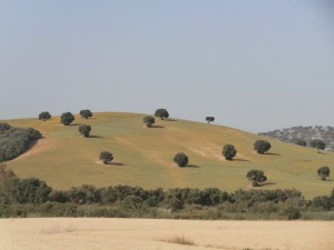Rolling hills Cadiz province
