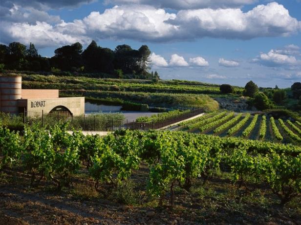 Llopart Cava Winery